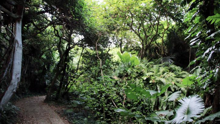 タコ公園の遊歩道は亜熱帯ジャングル